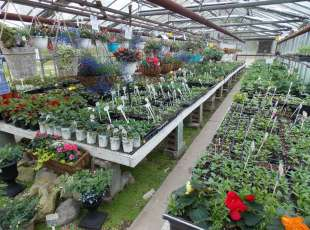 Morley's Country Garden Greenhouse & Nursery