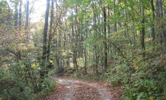 Brant Tract Trails